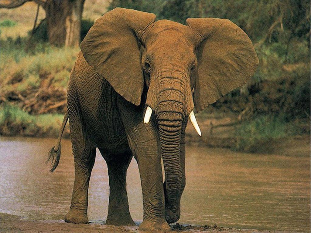 Impresionantes peleas de los animales mas fuertes del mundo